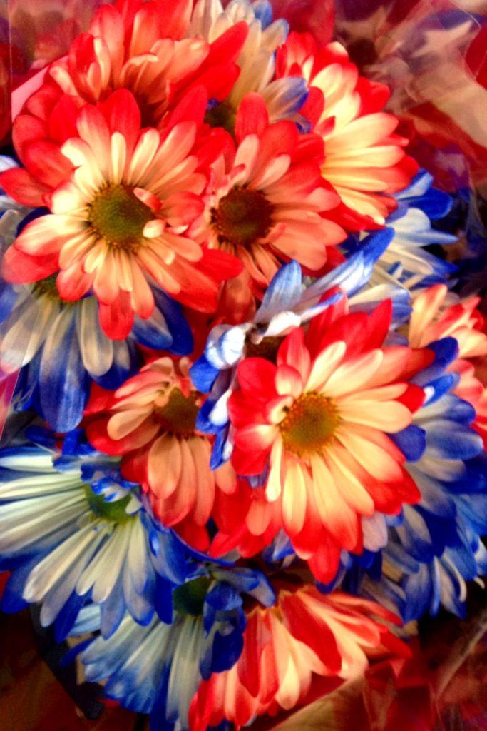 Patriotic flowers!