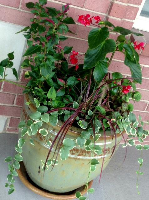 Pretty porch flowers! www.mytributejournal.com