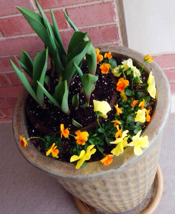 Spring container plants. www.mytributejournal.com