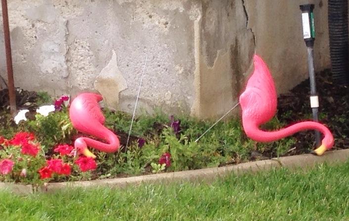 Pink falmingo's www.mytributejournal.com