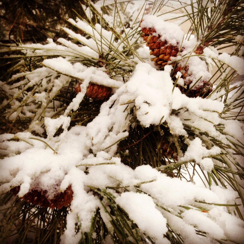 Enjoying winter weather www.mytributejournal.com