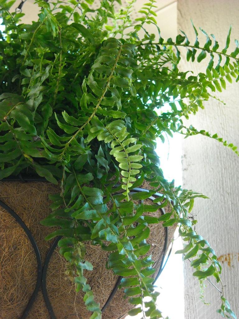Garden Therapy! Hardy Houseplants! www.mytributejournal.com