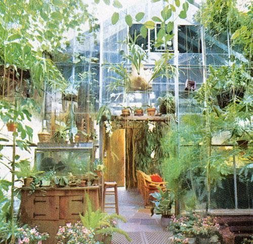 Garden Therapy! Hardy Houseplants!