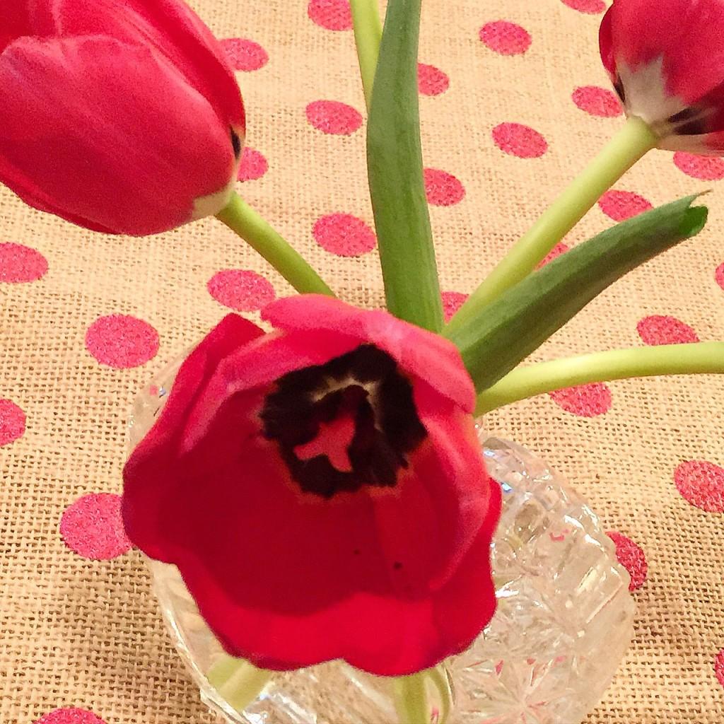 Spring tulips www.mytributejournal.com