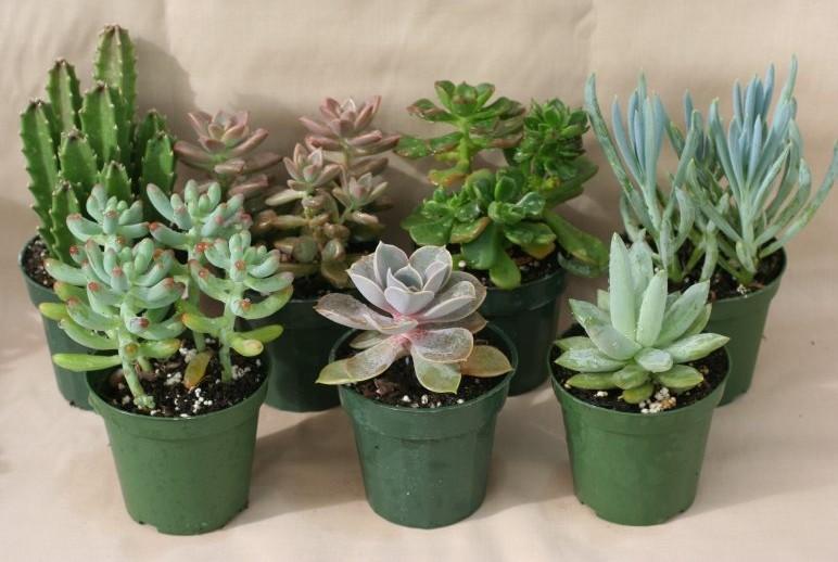 Succulent housplants www.mytributejournal.com