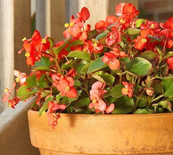 Hardy houseplants! www.mytributejournal.com