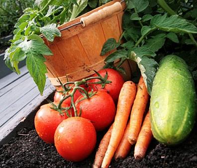 Fresh vegetables www.mytributejournal.com