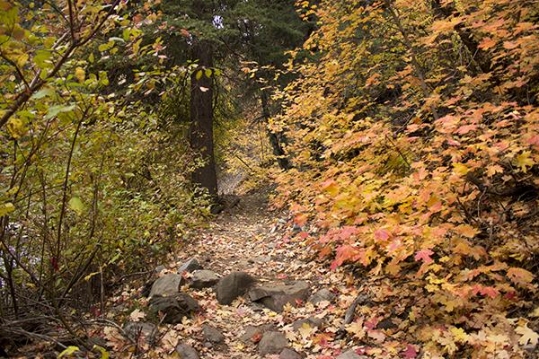 Mueller Park leaves