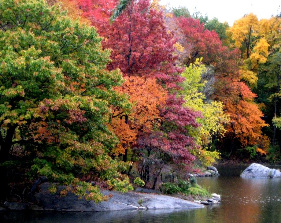 Garden Therapy! Fall Foliage!